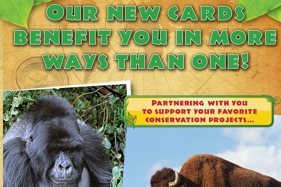 wildlife photography direct mail